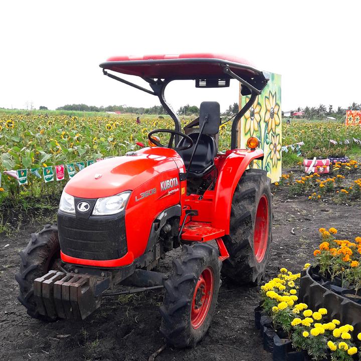 barotac nuevo sunflower farm