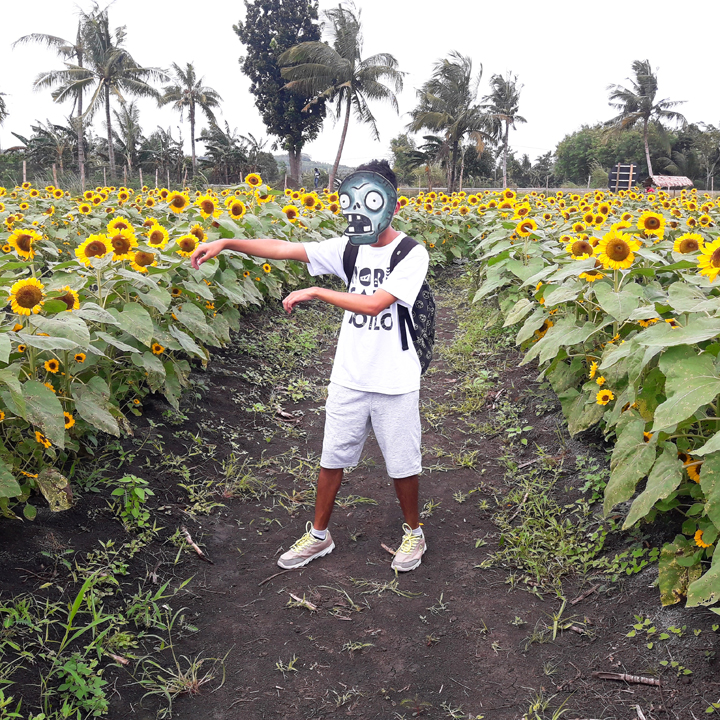 sunflower farm in barotac nuevo