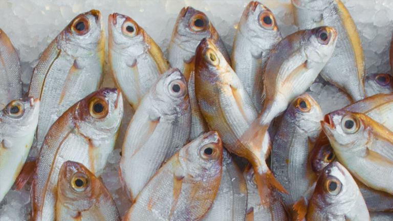 BFAR Region 6 Buys Fishes to Landlocked Areas