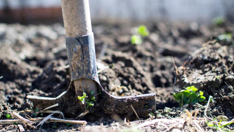 Iloilo City Starts Edible Landscaping